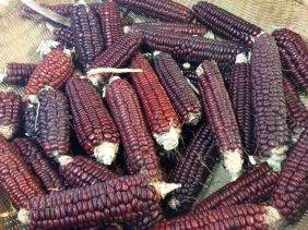 Mohawk Red Bread Flour Corn